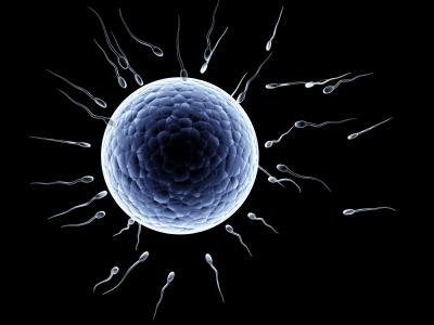 egg+sperm