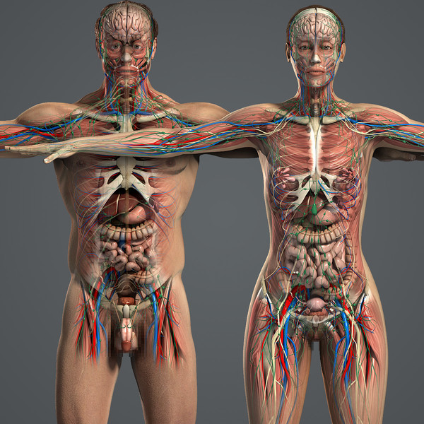 Male_and_Female_Anatomy_Complete_01.jpgeb18be85-a027-4efc-847c-c1366715e7e6Large